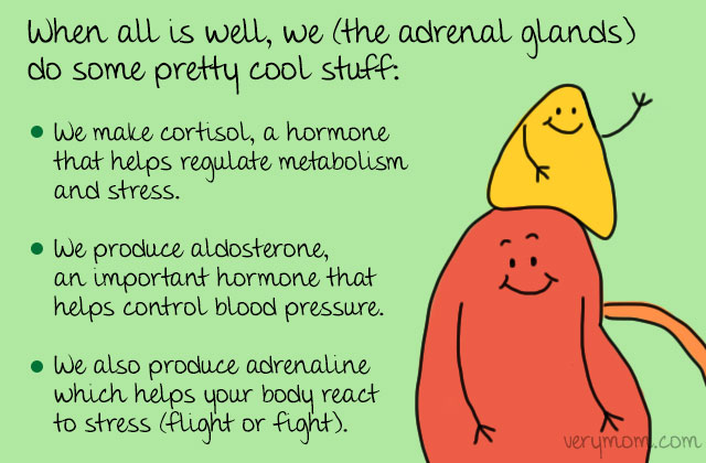 adrenal-function