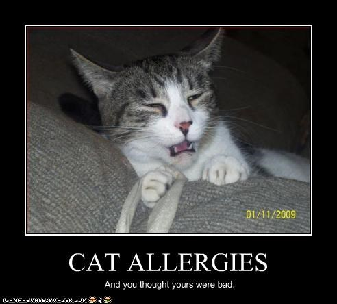 cat-allergy